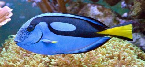 los peces de la sab 237 as que los peces pueden tener sed panam 225 punto com