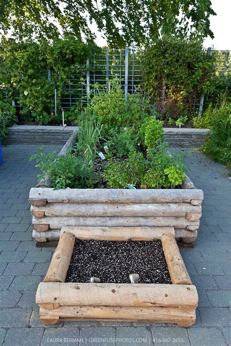 see how you can grow amazing vegetables in raised garden see how you can grow amazing vegetables in raised garden