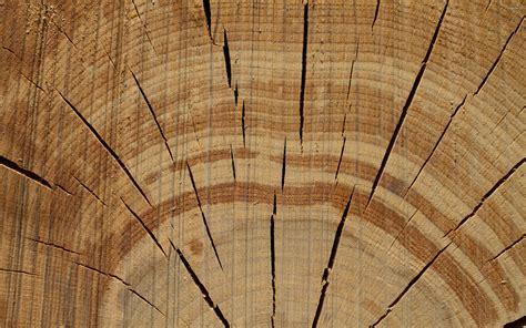 tree ring tree rings wallpaper 970885