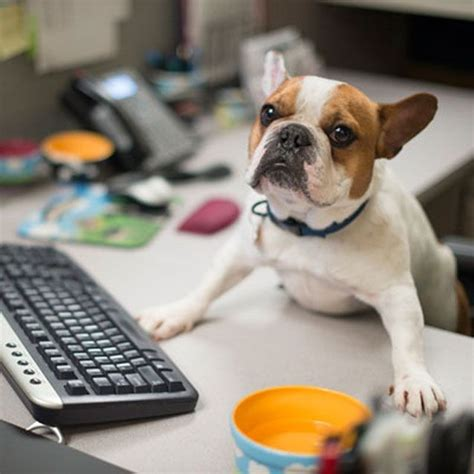dogs at work working like a 10 companies that let you bring your to work mnn