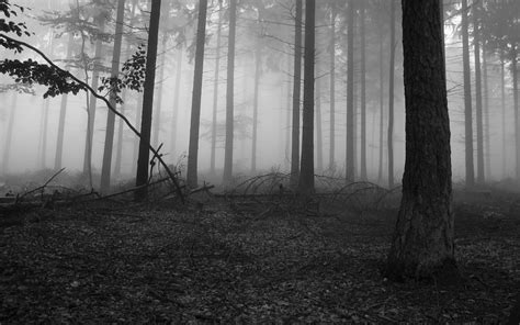 black  white forest wallpaper