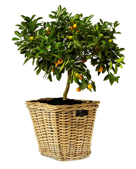 Willow Planters Uk by Kubu Woven Willow Flared Cube Basket Planter With Handles