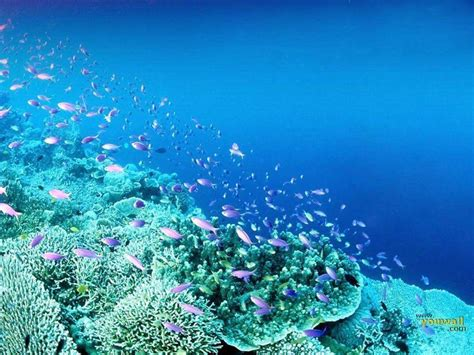 free wallpaper under the sea under the sea wallpapers wallpaper cave