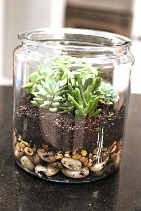 succulant planter easy diy succulent planters free printable included
