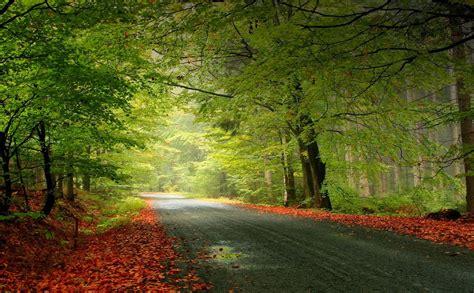beautiful forest hd wallpaper hd wallpaper p