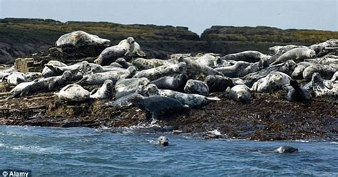 Corkscrew A Mystery mystery corkscrew deaths of seals revealed as fatal