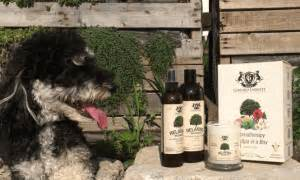 wholetones for dogs 4 remedies for your stressed out the dogington post