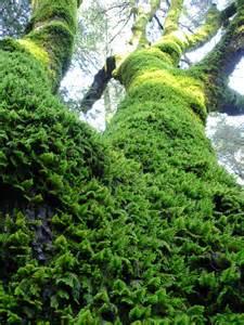 file green tree moss jpg wikimedia commons