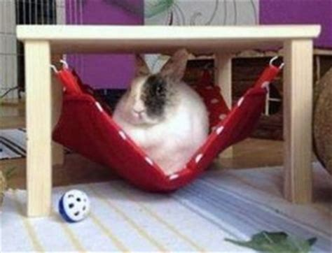 bunny beds where do rabbits sleep bunny beds bunny approved house rabbit toys snacks and