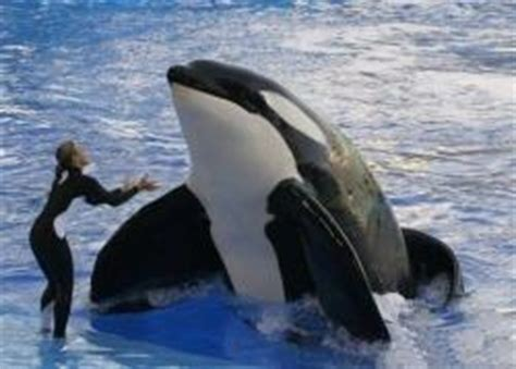 Orca Background Check Seaworld S Battle With The Government Check The Orca Project For