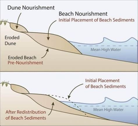 sandbar diagram restore coastal buffers and dune