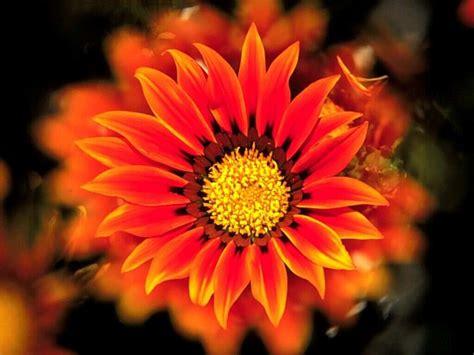 imagenes lindas de flores fotos de flores lindas fotos de flores lindas imagens