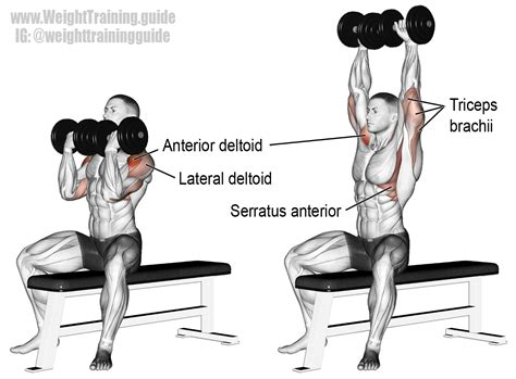 arnie bench press arnold press exercise instructions and video weight