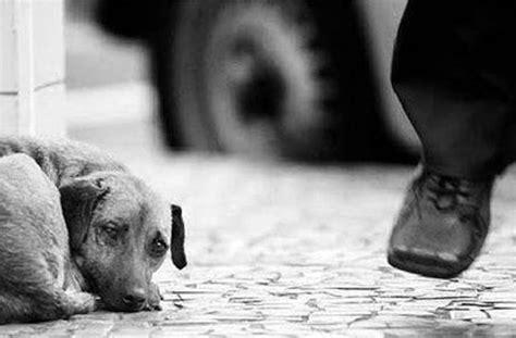 imagenes tristes x abandono estudo eis tudo abandono animal
