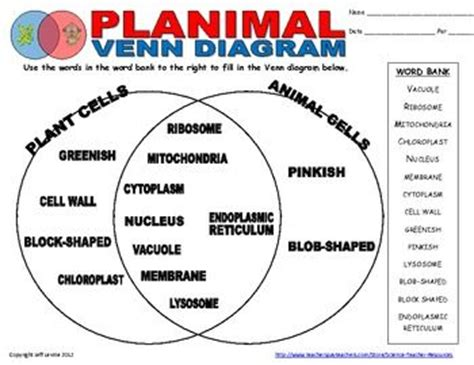 venn diagram animal and plant cells plant animal cell venn diagram compare and contrast