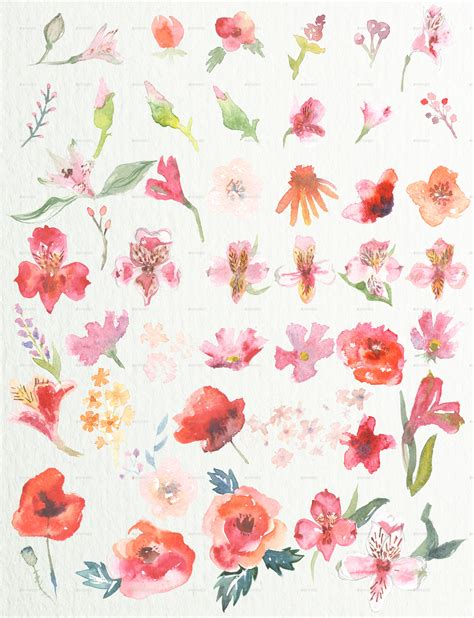 Set Flower watercolor floral set by ahtaner graphicriver