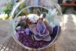 succulent kits succulent terrarium kit pretty in purplediy by