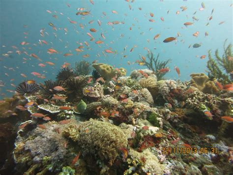 Selang Snorkel Scuba Diving amed scuba bali diving center for the of diving