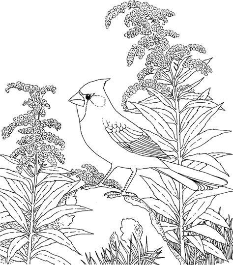 coloring page detailed winter coloring pages for adults coloring home