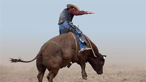 imagenes vaqueras en hd los chaps pantalones t 237 picos del traje de vaquero