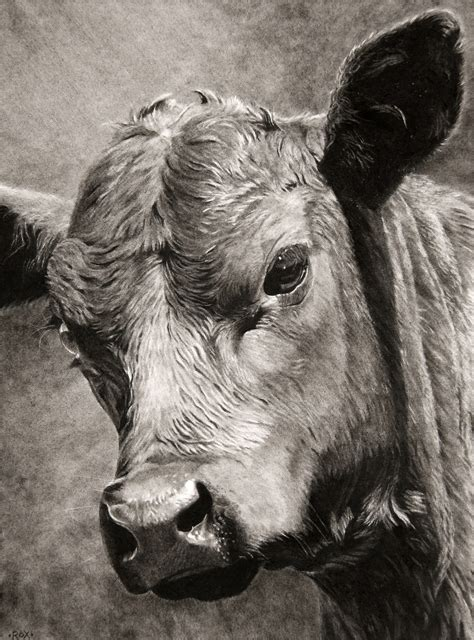 Cheers Big Ears 2 by Rox Corbett Equine Ranch