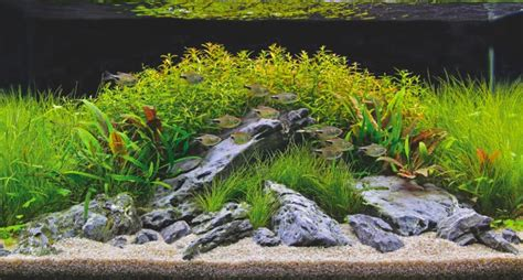 aquascaping magazine aquascaping taking it one step further practical