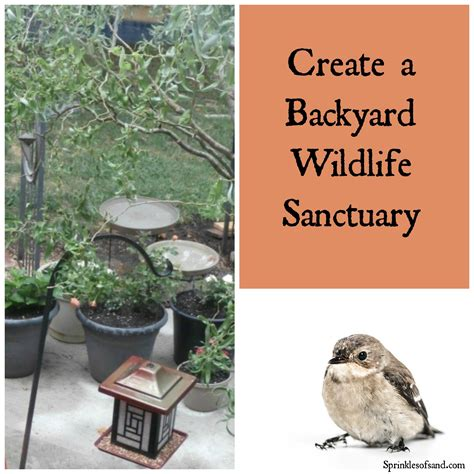 create a backyard wildlife sanctuary sprinkles of sand