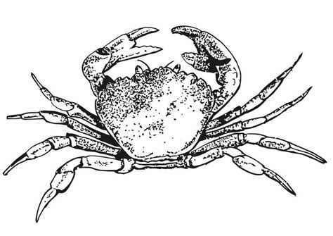 Free Coloring Pages Of Crab Crab Coloring Pages