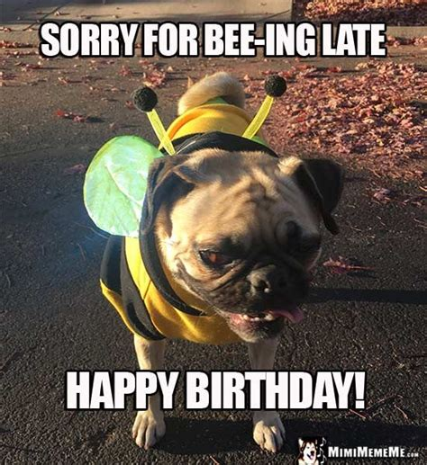 Happy Belated Birthday Meme - pug in bee costume sorry for bee ing late happy birthday