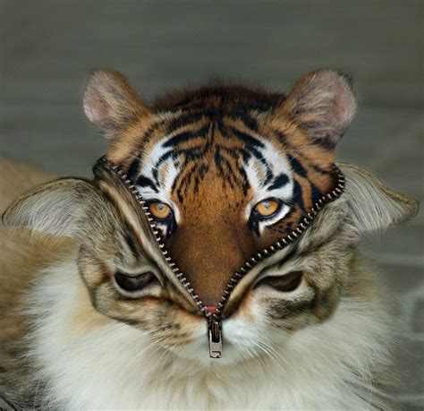 Best In Hybrids by Hybrid Animals The Best 13 Photoshopped Creations