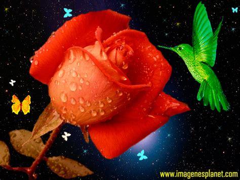 imagenes gifs romanticas de amor imagenes lindas para compartir fb im 225 genes rom 225 nticas con