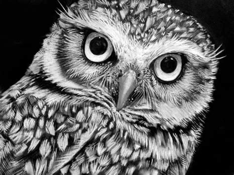 black and white owl wallpaper charcoal drawing drawing ideas pinterest eyes