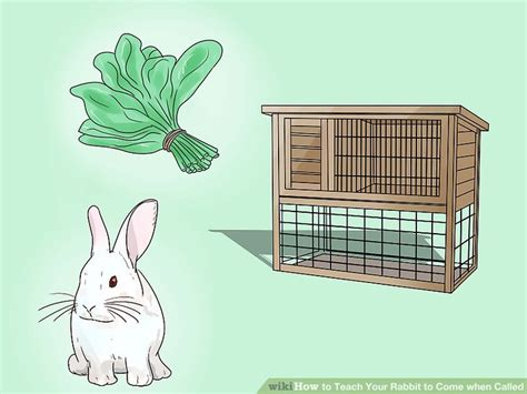 how to to come when called how to teach your rabbit to come when called 11 steps
