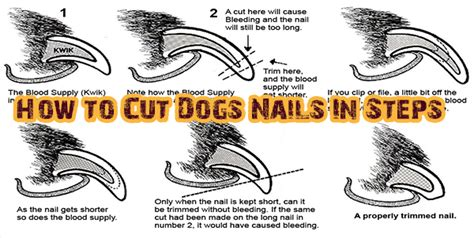 how to cut a dogs nails how often do you to trim nails best nails 2018
