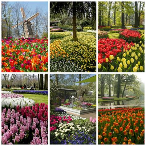 World Largest Flower Garden Living The Gardening Keukenhof The World S Flower Garden