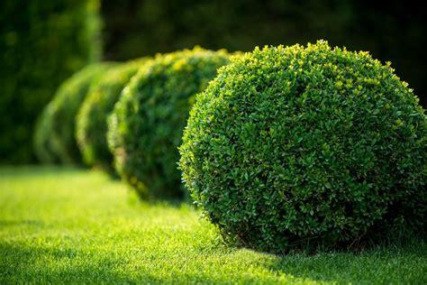 zone 8 evergreen shrub varieties selecting zone 8