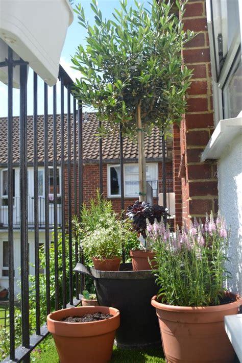 balcony gardens prove  space   small  plants