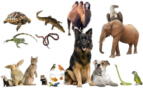 imagenes de animales terrestres wikipedia animales terrestres y pictures to pin on pinterest
