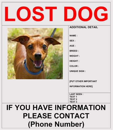 templates for missing dog flyers 20 lost cat dog flyer poster templates for microsoft
