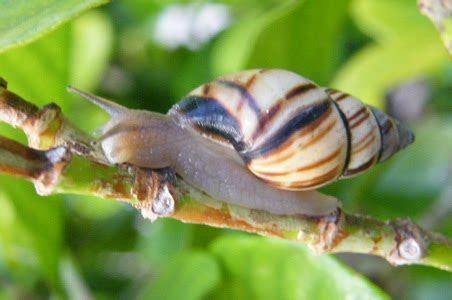florida nature pictures florida tree snail