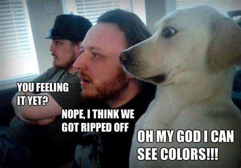 Good Shit Meme - that s some good shit man animal memes pinterest