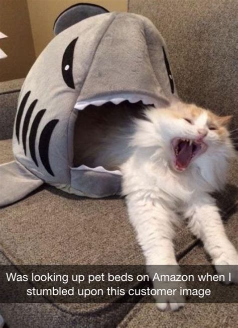 Funny Cat And Dog Memes - 35 funny cat memes to make you laugh quotations and quotes