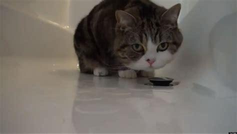 Cat In Bathtub by Maru Plays In Bathtub Cat Fascinated By