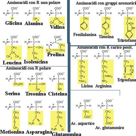 proteine e aminoacidi aminoacidi acidi