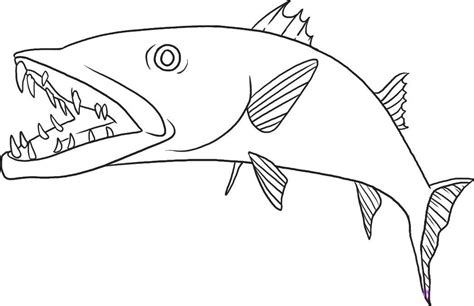 barracuda fish coloring page barracuda coloring pages download and print for free