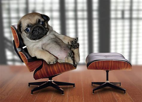 what to do with puppy when at work all day comedy for the unemployed iget2work 174 187 furniture humor