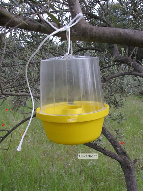 pi 233 geage de la mouche de l olive c 233 lia gratraud