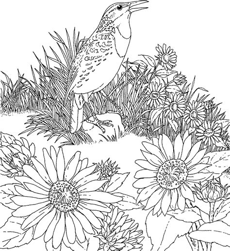 printable coloring pages of birds and flowers free printable flower coloring pages bird and flower state