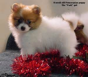 yorkie puppies for sale in evansville indiana pets evansville in free classified ads