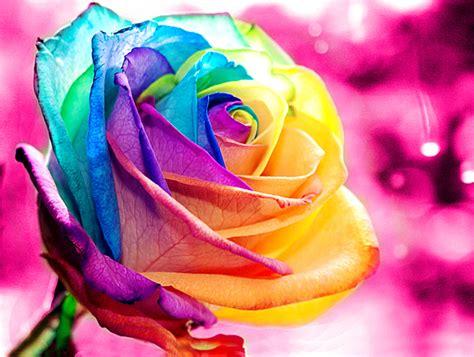 imagenes rosas de colores fondos aventurperu